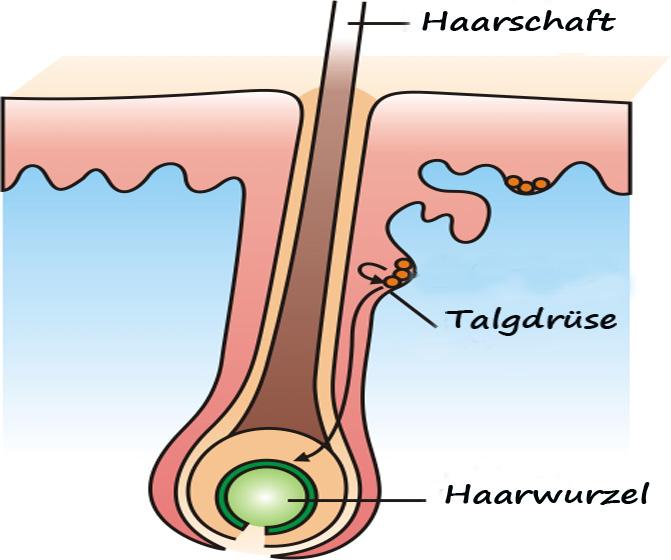 Haarwurzelentzündung was tun
